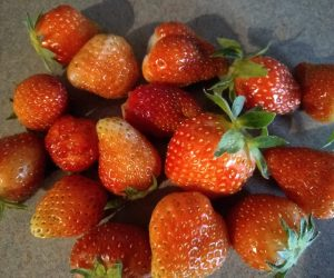 Mixed Strawberries (Everbearing)